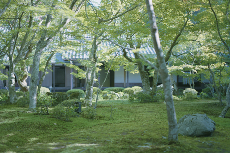 Nakajima. portfolio